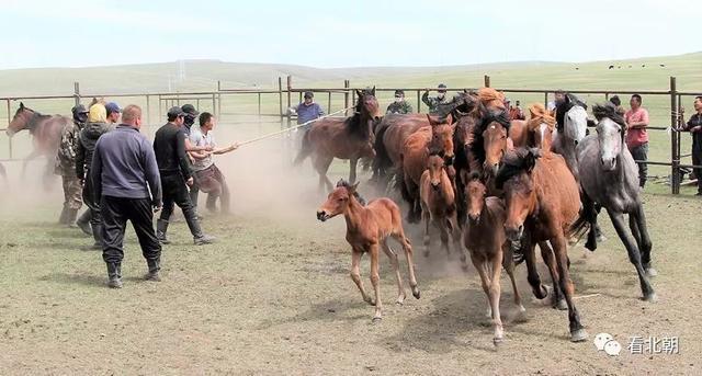 為什么古代中原沒有培育出類似阿拉伯、大宛馬這樣的騎乘名馬?